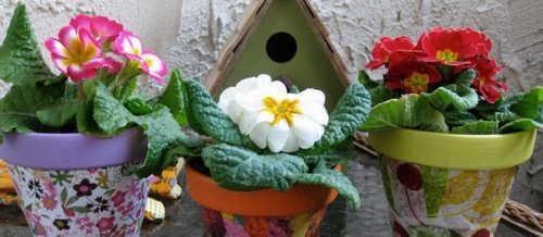 комнатные растения, горшок